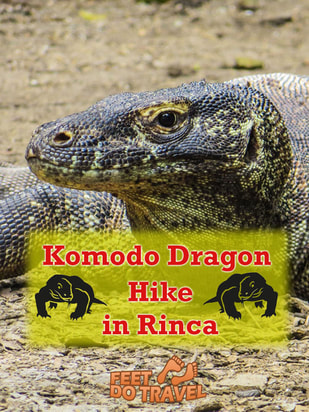 Komodo is famous for its beautiful National Park and of course, Komodo Dragons that can be found nowhere else on earth. What is it like to have an up close experience with these so called