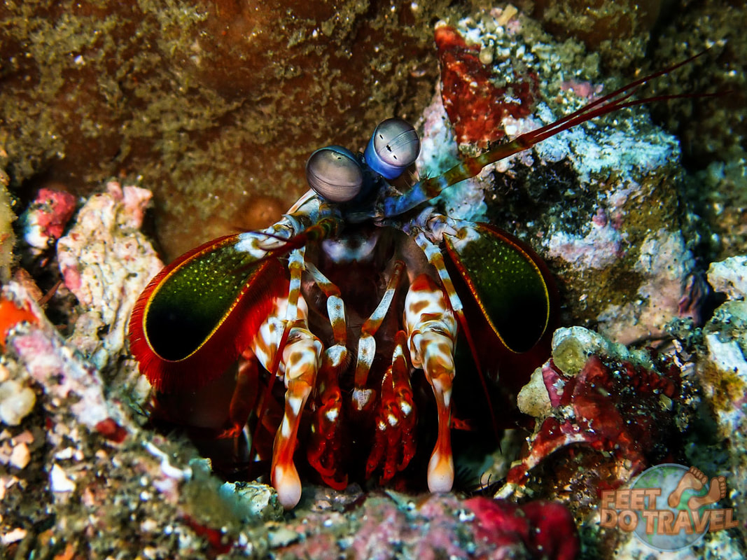 Scuba Diving Lembeh, North Sulawesi, Indonesia, Critter Capital of the World, muck diving, best macro diving in the world Feet Do Travel