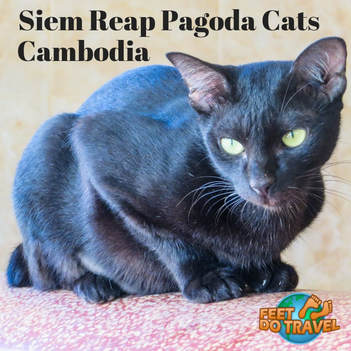 Siem Reap Pagoda Cats, Cambodia, better than a cat café for Cat Crazy Feet Do Travel