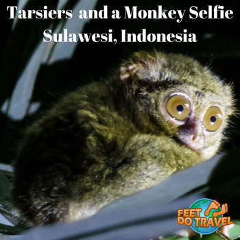 : Tarsiers and monkey selfie Tangkoko National Park, North Sulawesi, Indonesia Feet Do Travel