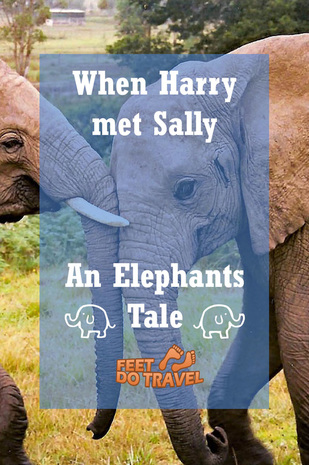 Read what happened when Harry the elephant met Sally ...yes they are named after the movie!