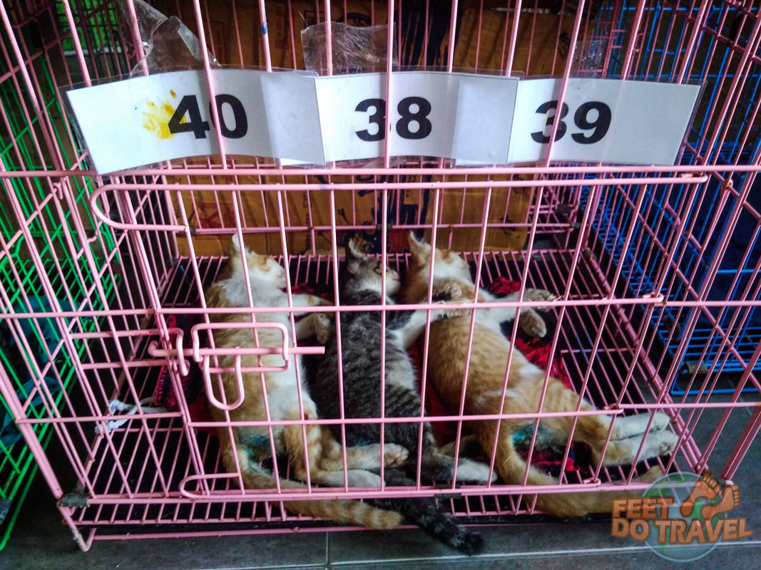 Volunteering at Gili Air Cat Clinic Gili Islands Gilis Gili Trawangan Animal Welfare Project Cat Crazy Cats of GIli