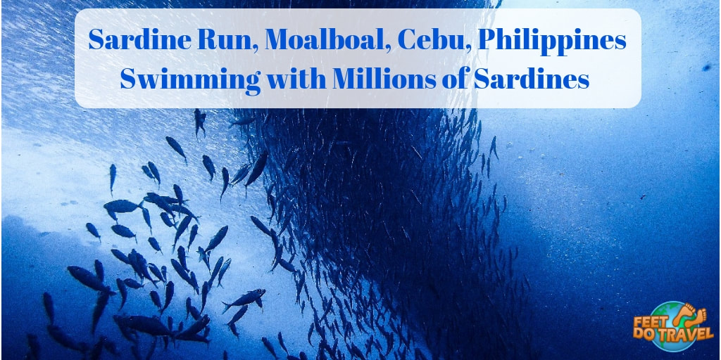 Sardine Run, Moalboal, Cebu, Diving the Philippines, Swimming with millions of Sardines, Feet Do Travel