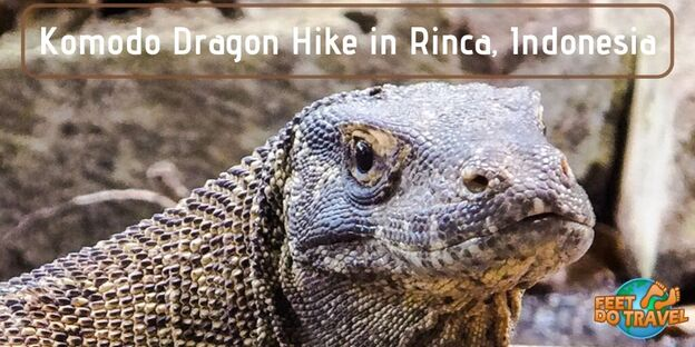 Komodo Dragon Hike in Rinca, Indonesia, Komodo National Park, Flores, Komodo Monitor, world's largest reptile, heaviest living lizard, Feet Do Travel