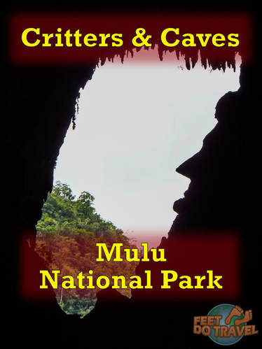 Mulu National Park is the perfect place to visit for lovers of hiking, jungle walks, geology, caves and of course critters! Check out our exciting 4 day adventure!